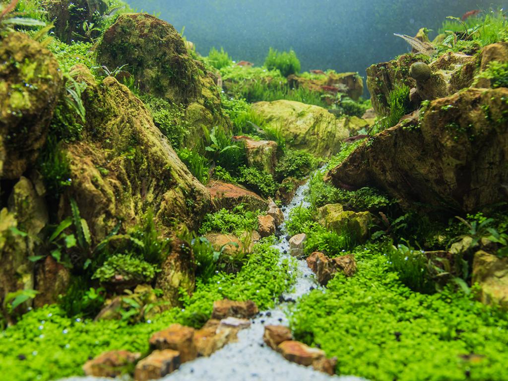 Aquascaping paysage aquatique