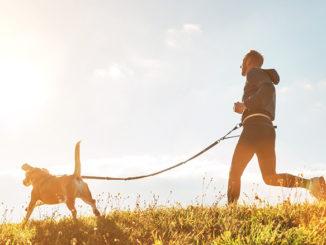 Canirunning sport chien
