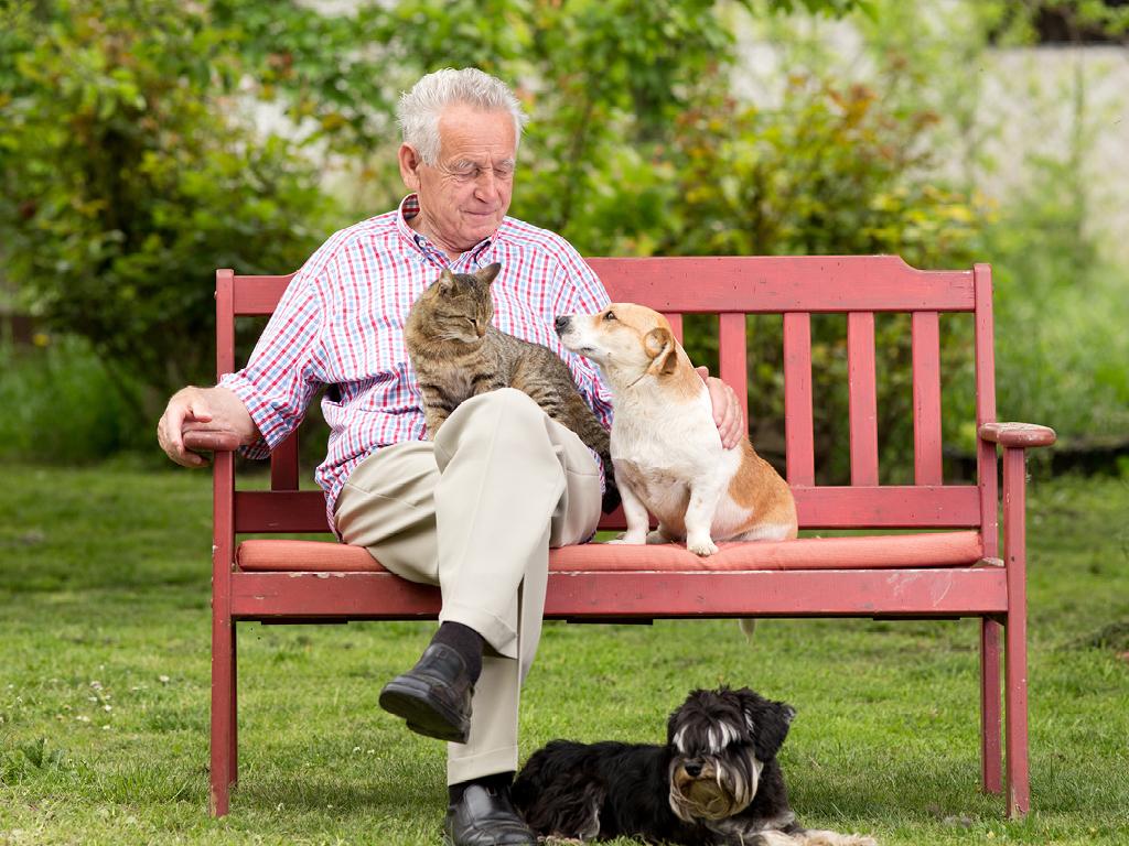 Petsitting chien chat