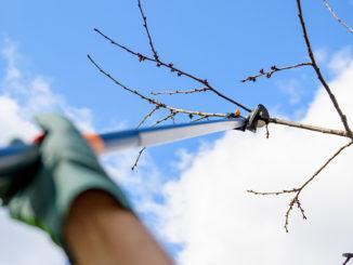 Elagage branche arbre