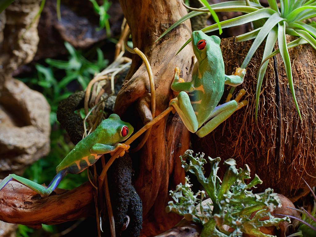 Grenouille terrarium plantes
