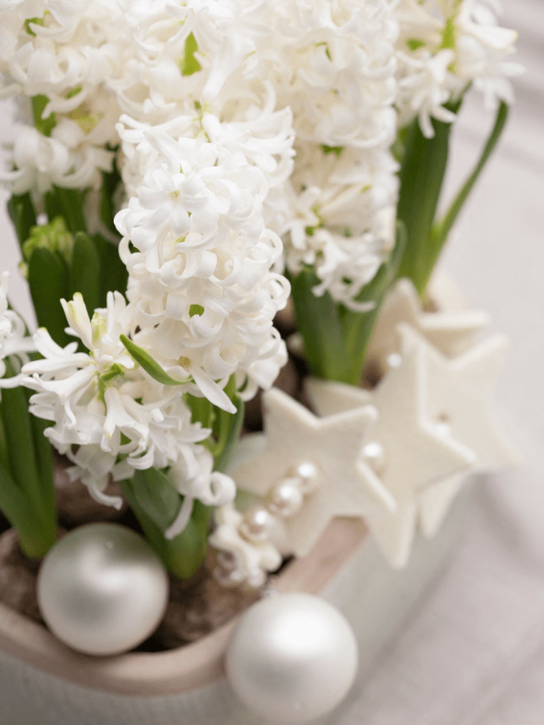 Fleur jacinthe blanche