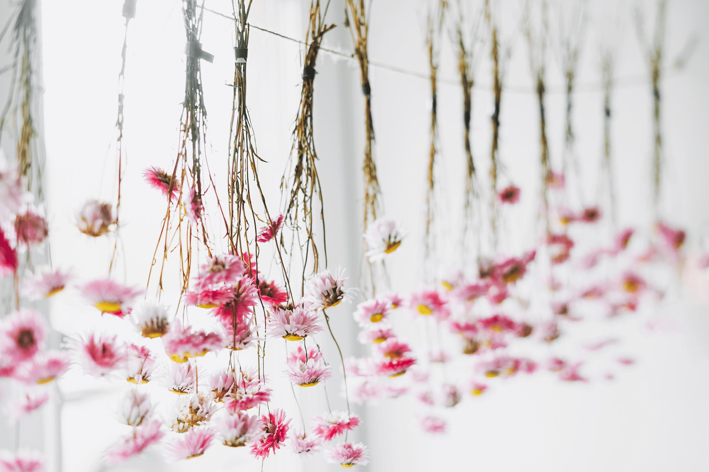 Fleurs suspendues sechage