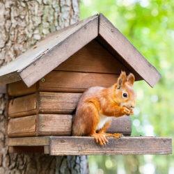 Écureuil dans un abri