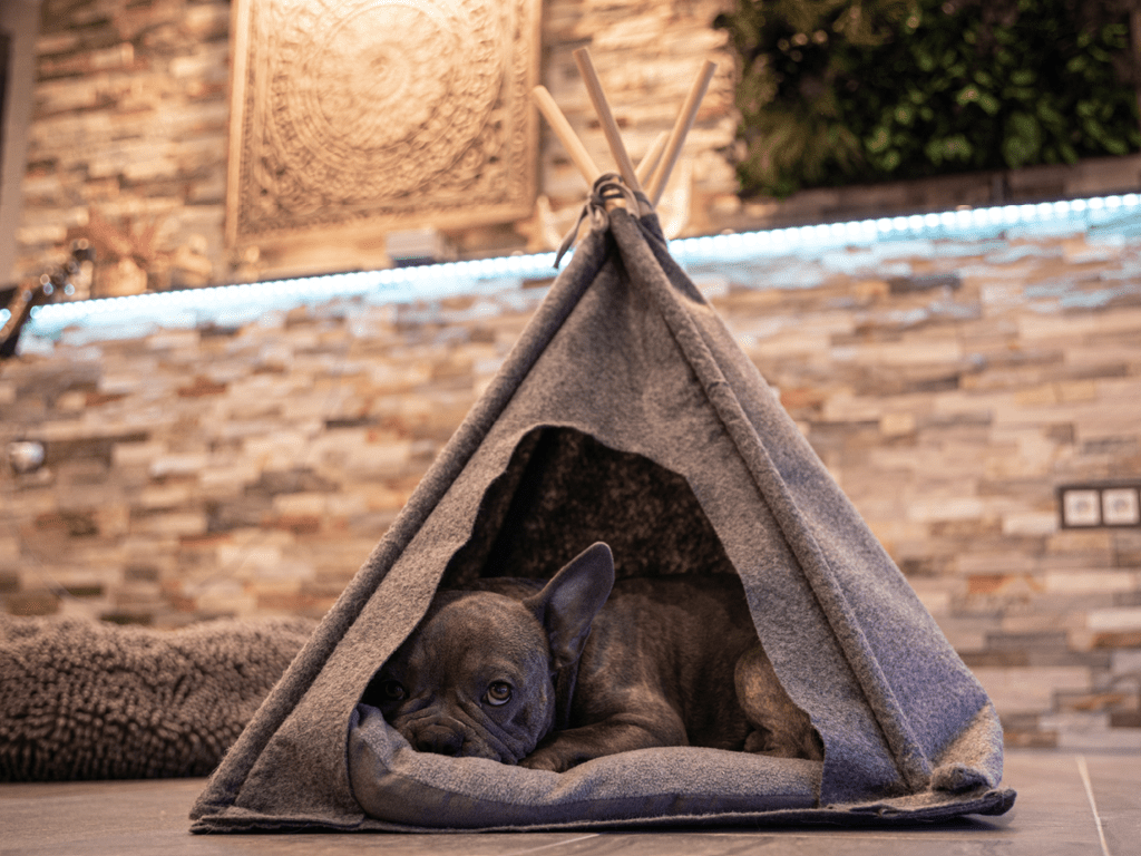 couchage matelas chien