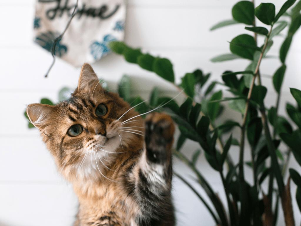 chat plantes danger