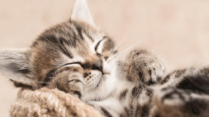 chaton repos couchage