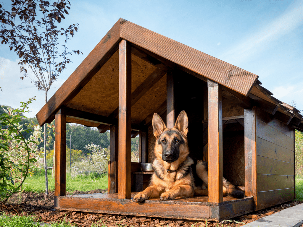 chien niche couchage