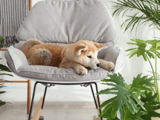 chien plantes danger